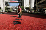 Cranberry bog