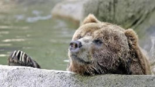 bear_03.jpg