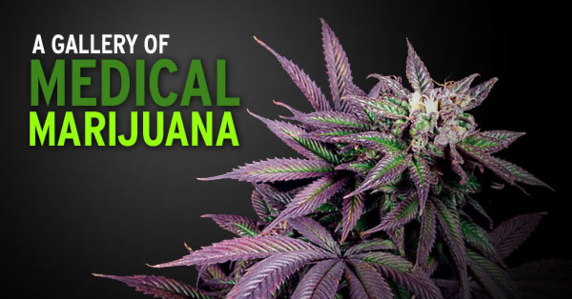 editorial marijuana Washington initiative 502 (i-502) on marijuana reform was an initiative to the washington state legislature, which appeared on the november 2012 general ballot, passing by a margin of approximately 56 to 44 percent.