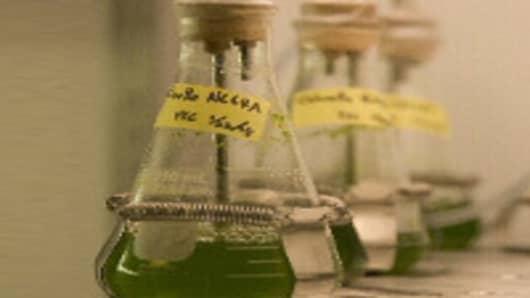 algae_rd.jpg
