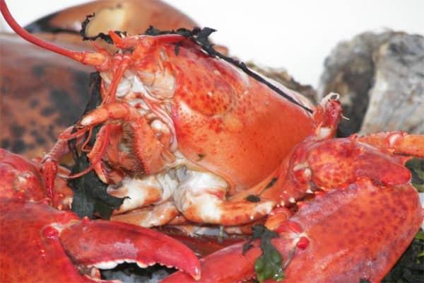 lobster_640.jpg