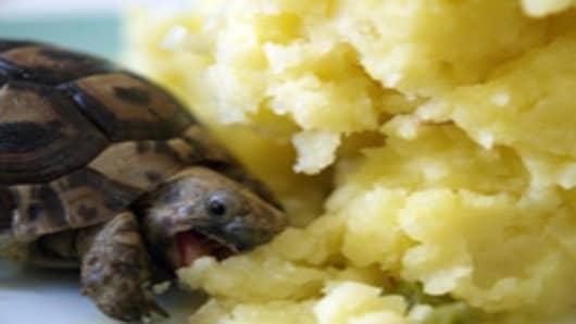 Tortoise eating mashed potatoes.