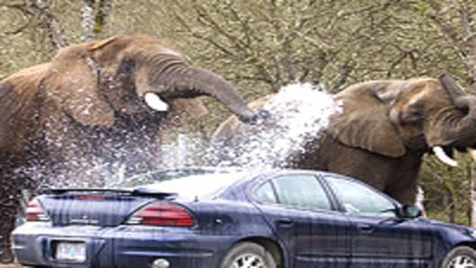 Elephants washing a car at Wildlife Safari.