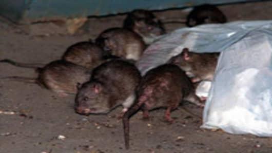 rats_200.jpg