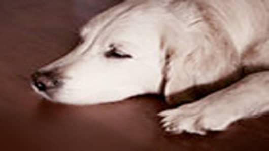 dogs_ofthe_dow_140.jpg