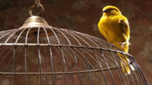 bird_on_bird_cage_200.jpg