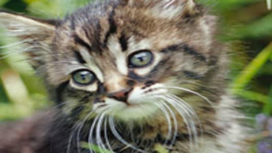 cat_200.jpg