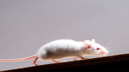 mouse_200.jpg
