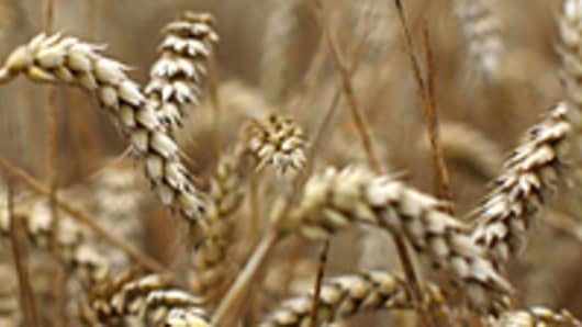 wheat_crop_2_200.jpg