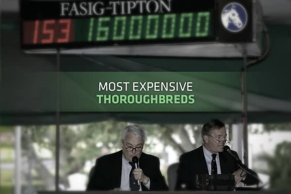 Photo credit: Fasig-Tipton