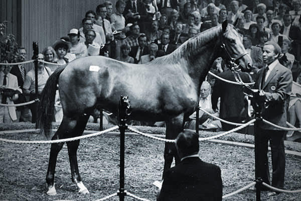 : $8.25 millionAnother son of Northern Dancer, Imperial Falcon won two races in his career after being bought in 1984 for $8.25 million.