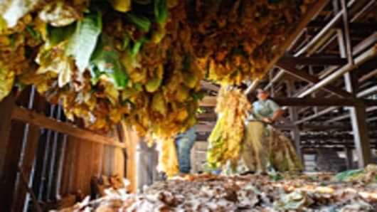 Tobacco farmer Todd Clarke hangs his crop to cure.