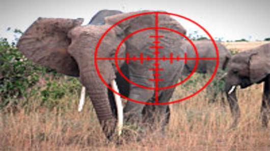elephant_crosshairs_200.jpg