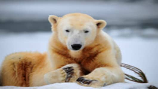 Germany was in stunned mourning after the sudden and premature death of Knut, Berlin's world-famous polar bear, who died on March 19, 2011.
