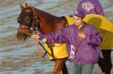 Awesome Gem on his way to the paddock for the 2007 Breeder's CUp Classic powered by Dodge at Monmouth Park Racetrack.