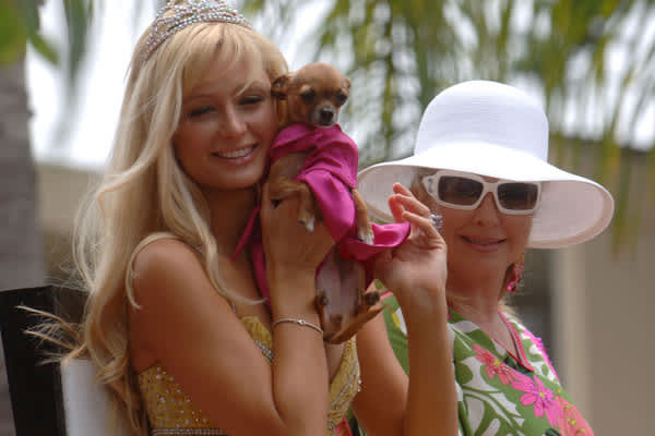 "Socialite Paris Hilton's Teacup Chihuahua named Tinkerbell has appeared in all five seasons of her reality TV show ""The Simple Life,"" often dressed in designer chic to mirror the heiress' appearance.A parody on Tinkerbell's life titled ""The Tinkerbell Hilton Diaries: My Life Tailing Paris Hilton"" was released in 2004 by writer D. Resin. The mutt also made headlines that year when she went missing for six days after Hilton's house was burgled. Hilton offered a $5,000 reward for the dog's return."