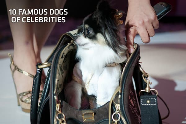It's a dog's life! And its wow… From strutting the red carpet to eating out at expensive restaurants, these dogs owned by heads of state, music divas and even royalty, are sometimes more famous than their celebrity owners.They have fans following them on their personal websites and fashion labels inspired by them. To keep the mutts in the public eye, several celeb owners also regularly tweet about the lives of their pets.We've put together a list of some of the world's most famous celebrity dogs