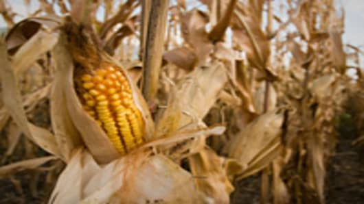 corn_field_dry_200.jpg