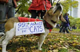 Occupy Wall Street dog