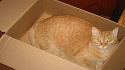 cat-in-box-200.jpg