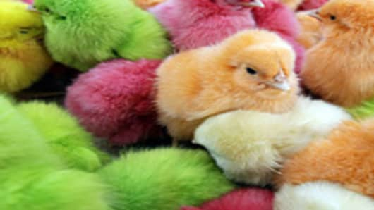 Chicks, that are dyed with artificial colors are sold as Easter gifts