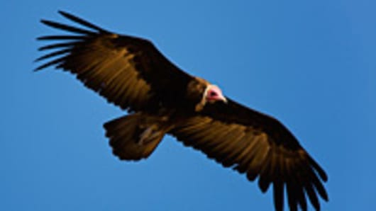 vulture-flying-200.jpg