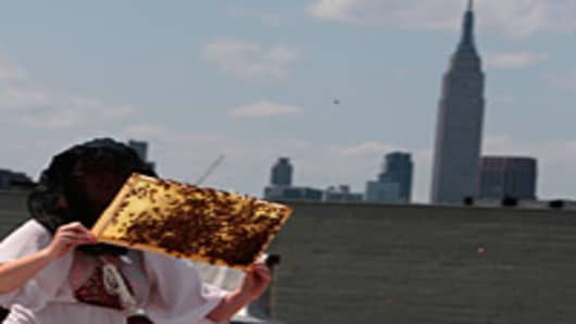 An urban beekeeper inspects part of her colony of Italian honeybees on the roof of her Brooklyn building. Beekeeping is a growing phenomenon among environmentally-conscious urban dwellers in cities nationwide, and practioners cite the health benefits of natural honey as well as the boon to gardening that bees provide by pollination.