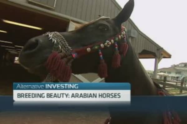 Investing in Arabian Horses
