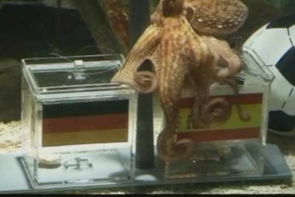 'Paul the Octopus' In Action