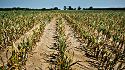 dried-corn-field-200.jpg