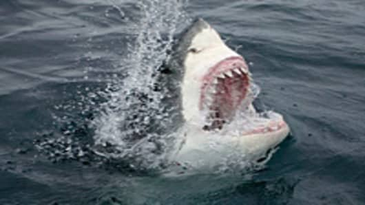 great-white-shark-200.jpg