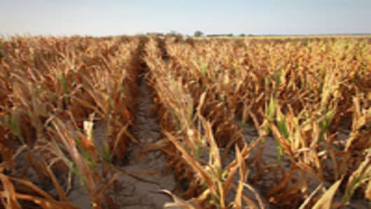 Corn struggle to survive in a drought-stricken farm field on July 16, 2012 near Uniontown, Kentucky. The corn and soybean belt in the middle of the nation is experiencing one of the worst droughts in more than five decades.