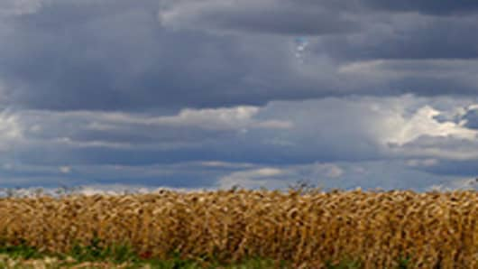 Rain clouds seen over a cornfield.