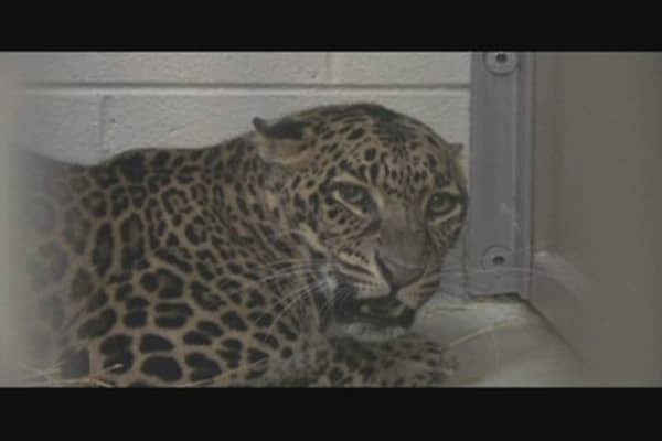 Dangerous Trade: Exotic Animals