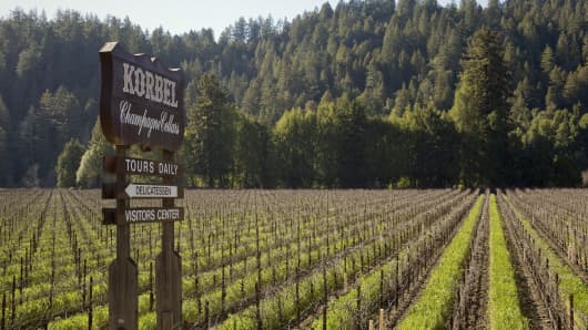 A Korbel Champagne Cellars vineyard, located across the street from the winery in Guerneville, California,