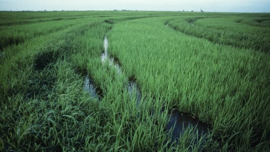 Rice fields in Texas.