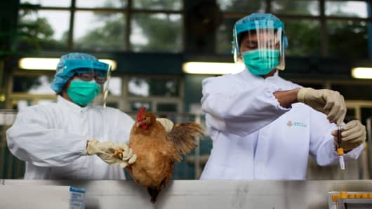 Chinese health officials taking blood sample from a chicken as Beijing reports its first human case of H7N9 bird flu.