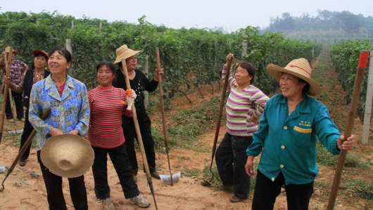 Vineyard workers at Chateau Changyu AFIP, 80 kilometers north of Beijing.