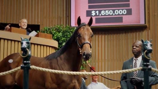 This Thoroughbred colt fetched $1.65 million on the auction block at Keeneland Association's 2012 September Yearling Sale.