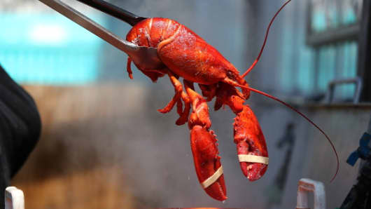 Lobster industry squeezed by oversupply