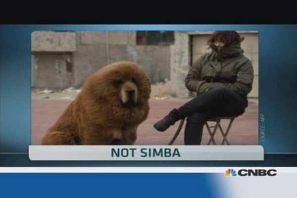 Chinese zoo swaps lion for dog