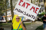 A protester against Monsanto genetically modified food in New York's Bryant Park.