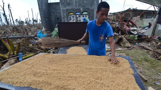 A man cleans spoiled rice in a devastated area in Tacloban City in the Philippines.