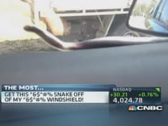 Snake on a windshield!