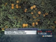 Weather Woes: Citrus crop fears