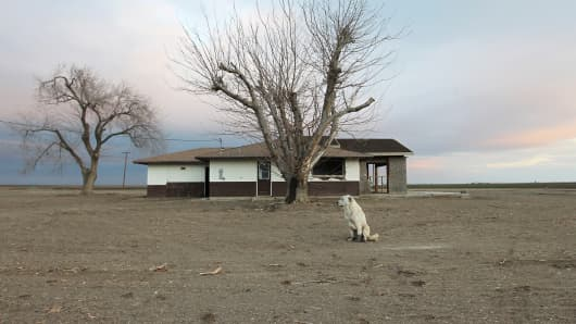 A dog hangs around an abandoned farmhouse in early February near Bakersfield, Calif.