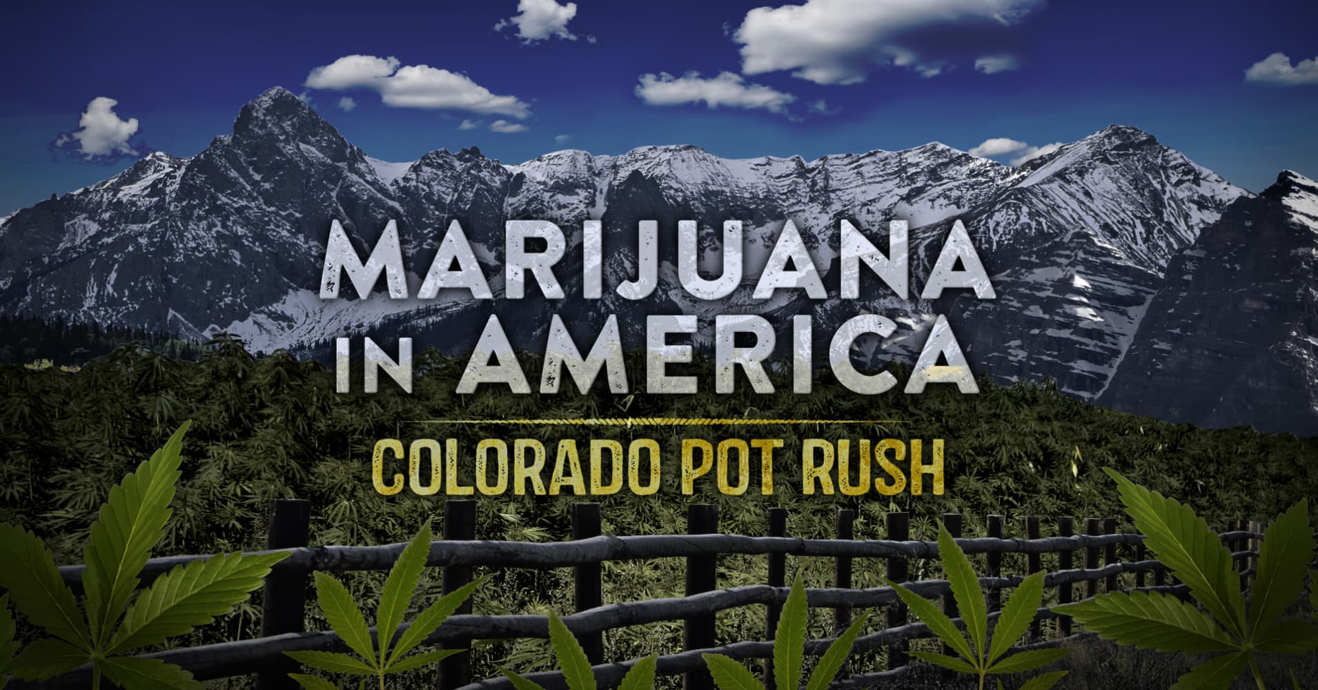 an analysis of marijuana in america Recreational marijuana sales are skyrocketing it's time to take the legal pot market seriously.
