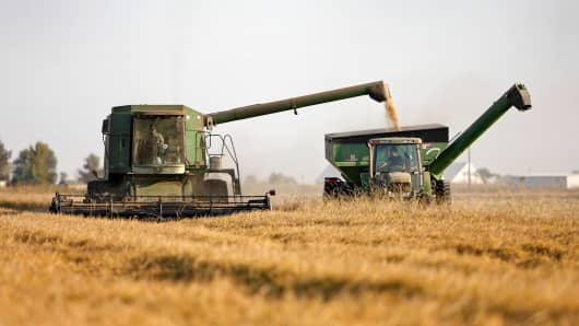 Rice harvest in Williams, Calif.