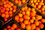 Oranges sit in crates during a citrus harvest at the Rancho Del Sol Organics farm in San Diego County, California.