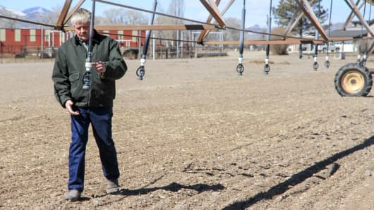 Jamie Hart dedicates 300 acres of his farm for his barley crop.
